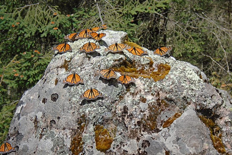 monarcas2